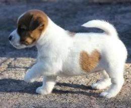 #SIgn of Love Puppy. This is a first for sure.