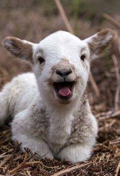 bébé-chèvre