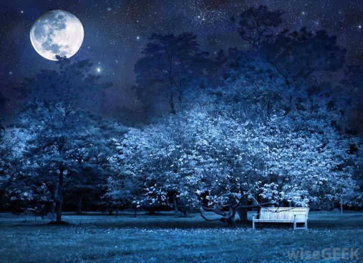 moonlight-garden-17